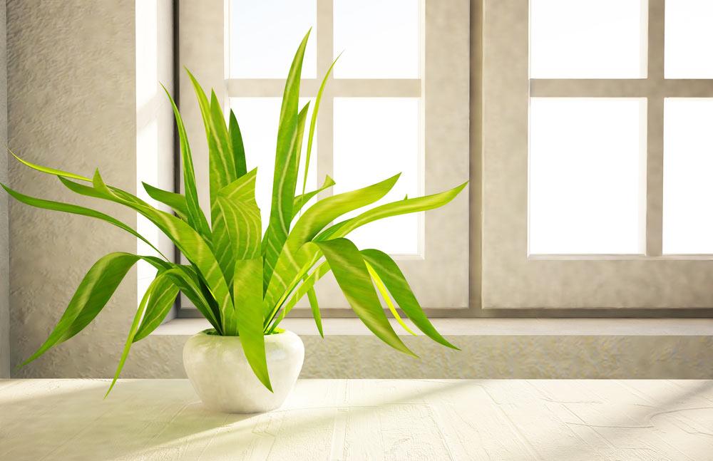 växt i trappfönster