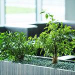 växter på kontoret