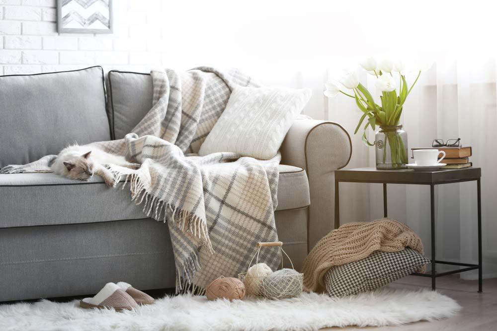 vitt katt i grå soffa