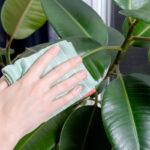 rengöra krukväxter