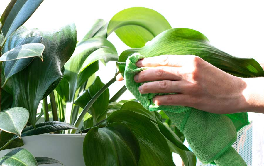 städa krukväxter